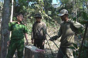 Đắk Lắk: Tạm giữ hình sự 4 đối tượng khai thác gỗ trái phép quy mô lớn