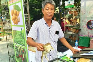 Lãi lớn nhờ nuôi ếch