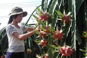 Quá ít trái cây xuất chính ngạch qua Trung Quốc