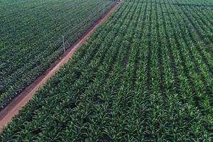 Bầu Đức vẫn kiểm soát công ty nông nghiệp dù sở hữu dưới 50% vốn