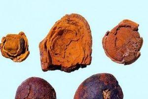 Khối đá xù xì 12 tỷ đồng, sỏi mật trâu bò đắt hơn vàng giá tới 300 triệu/kg