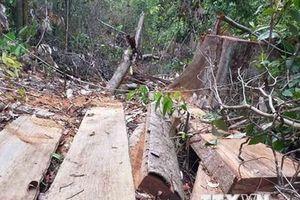 Phát hiện vụ phá rừng quy mô lớn tại Đắk Lắk sau 5 tháng mật phục