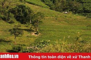 Chủ tịch UBND huyện Mường Lát trả lời đơn của các hộ dân bản Chim, xã Nhi Sơn