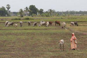 Thủ tướng Thái Lan đề xuất miễn tiền nước cho người dân vùng hạn