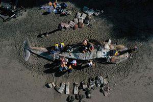 Kinh hoàng cái chết của hàng chục con cá voi xám bụng rỗng