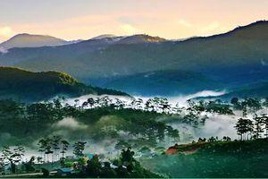 Lâm Đồng ngăn chặn nhiều nhóm người xâm nhập trái phép vườn quốc gia