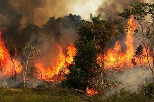 Rừng Amazon cháy suốt 17 ngày qua, khói đen cuồn cuộn trong biển lửa hừng hực