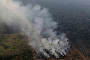 Xót xa với hình ảnh rừng Amazon bị lửa thiêu cháy