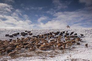 Cuộc sống của những người thợ săn bằng đại bàng ở miền Tây Mông Cổ (Phần I)
