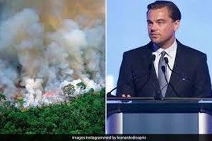 Leonardo DiCaprio và loạt sao lên tiếng về vụ cháy rừng Amazon: Phổi chúng ta đang cháy!