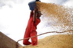 Trung Quốc vẫn mua đậu tương của Mỹ sau lệnh cấm nhập khẩu nông sản