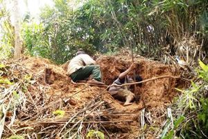 Kon Tum: Nam thanh niên đào hầm bắt dúi, bị đất lở vùi chết
