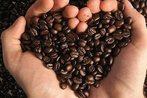 Giá cà phê hôm nay 23/8: Giảm nhẹ 100 đồng/kg