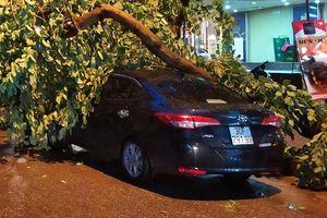 Hiện trường vụ dông lớn làm cây đổ đè ôtô ở Linh Đàm