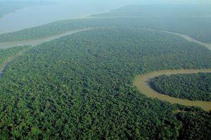 Bí ẩn quanh rừng Amazon, khoa học 'giật mình' lý giải