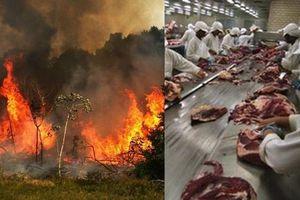Thịt bò đã 'đốt cháy' rừng nhiệt đới Amazon như thế nào?