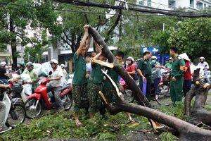 Hàng loạt cây xanh bật gốc sau trận mưa lớn ở Hà Nội