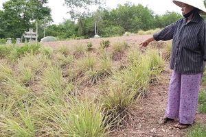 Thừa Thiên Huế: Đền bù đất giá 'bèo', dân bất bình