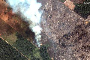 Giật mình trước mức độ cháy rừng ở Amazon - lá phổi của hành tinh