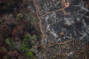 Khủng hoảng cháy rừng Amazon khiến nhiều người tuyệt vọng