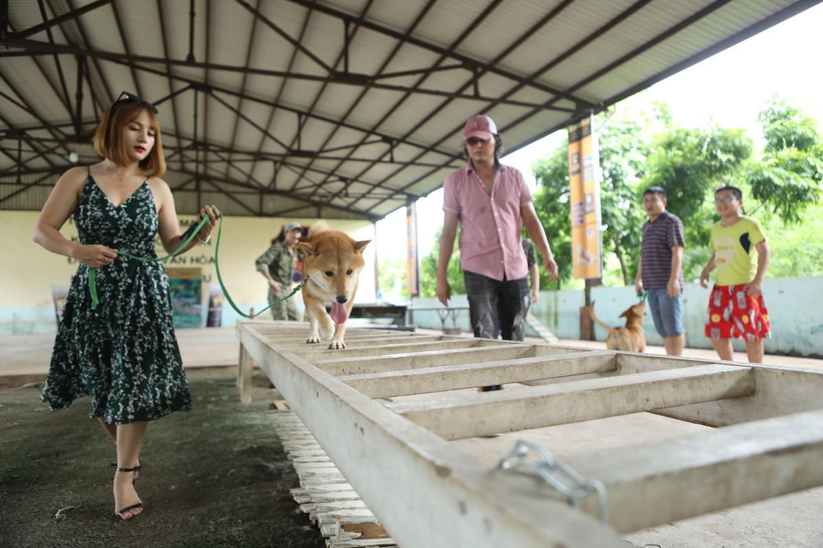 Phim 'Cậu Vàng' gây tranh cãi vì chọn chú chó giống Nhật đóng vai chính