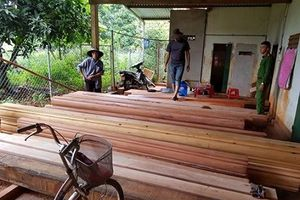 Đắk Lắk: Mở rộng điều tra vụ phá rừng tại huyện Ea Kar