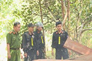 Vụ khai thác gỗ quy mô lớn ở Đắk Lắk: Phát hiện thêm nhiều điểm tập kết gỗ 'khủng'