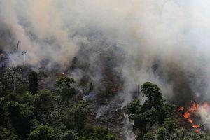 Brazil gồng mình chống cháy rừng nhưng vẫn gạt phăng đề nghị hỗ trợ từ Mỹ