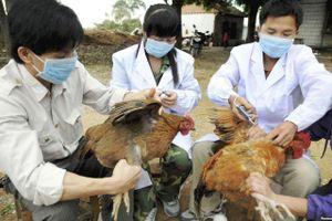 Hà Nội: Dịch bệnh gia súc, gia cầm vẫn diễn biến phức tạp