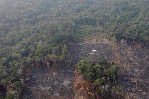 Rừng Amazon bị bốc cháy thất thoát hơn 8 tỷ USD mỗi năm
