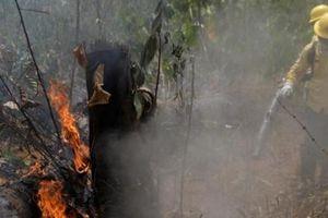 Máy bay chiến đấu và quân đội Brazil tham gia dập lửa tại Amazon