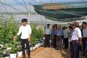Bà Rịa - Vũng Tàu: Hướng đi mới trong nông nghiệp ứng dụng công nghệ cao
