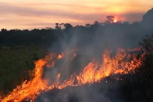 Liên tiếp bùng nổ cháy rừng, viễn cảnh tồi tệ nhất sẽ ra sao?