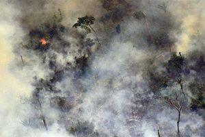 Cháy rừng Amazon: Brazil bất ngờ từ chối 20 triệu USD viện trợ khi lửa đang lan rộng