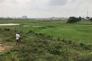 Quy hoạch đô thị khiến hơn 40 ha đất hai vụ lúa bỏ hoang