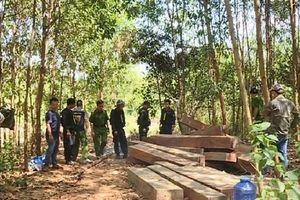Lại phát hiện các vụ phá rừng quy mô lớn ở Đác Lắc