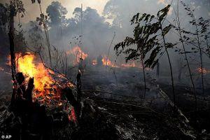 Brazil từ chối gói trợ cấp chữa cháy rừng 20 triệu đô của G7