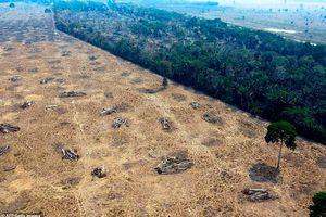 Giật mình mức độ thảm khốc của cháy rừng Amazon qua ảnh vệ tinh NASA