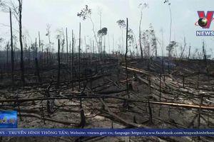 Brazil khước từ hỗ trợ của G7 giúp chống cháy rừng Amazon