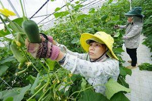 Hà Nội phát triển chuỗi nông sản an toàn: Doanh nghiệp và người sản xuất cùng lợi