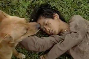 Câu chuyện ly kỳ về chú chó thông minh đóng phim 'Đất phương Nam'