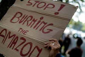 Brazil đau đầu vì cháy rừng Amazon