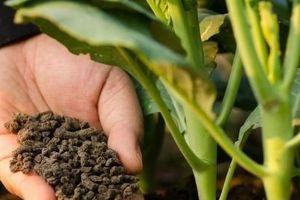 Thúc đẩy sản xuất, sử dụng phân bón hữu cơ, xây dựng nền nông nghiệp sạch