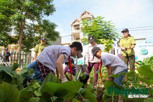 Thí điểm trồng cây thuốc nam thay thế mật gấu tại Hà Nội