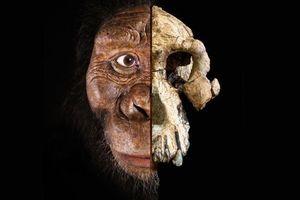 Tin tức thế giới 29/8: Phát hiện khuôn mặt mới của tổ tiên loài người 3,9 triệu tuổi