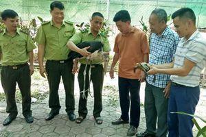Chim khổng lồ, cực hiếm ở Hà Tĩnh đã về với Vườn Quốc gia Vũ Quang