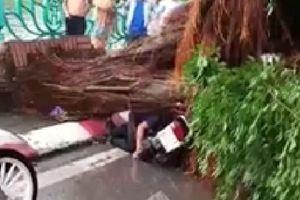 Dông lốc 'quần thảo' Hà Nội, 2 người bị cây đổ đè lên người ở khu vực gần hồ Tây