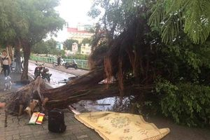 Nam thanh niên bị cây đổ đè chết thương tâm ở đường ven Hồ Tây