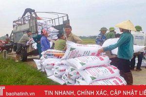 Thu mua lúa tươi tại ruộng, doanh nghiệp 'chạy' bão cùng nông dân Hà Tĩnh