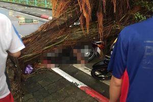 Nam thanh niên bị cây đè tử vong, nhiều người bị thương sau mưa giông kinh hoàng ở Hà Nội